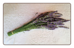 A Bouquet of Lavender-  Freshly harvested